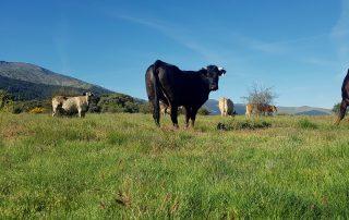 entorno rural con animales